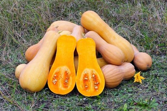 butternut_squash_produce_gourd_264093